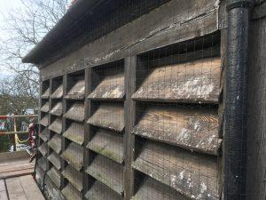 Ashford Bird Control Services