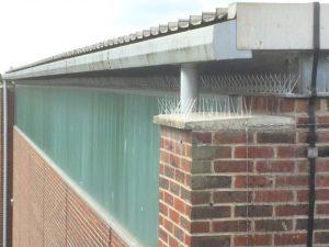 Bird spike installtion in Kent