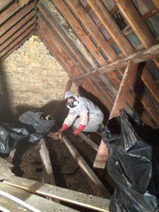 Bird waste clearance from loft