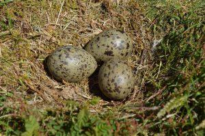 Contract Bird Control Services Kent