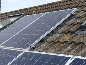 Solar panel pigeon protection Kent