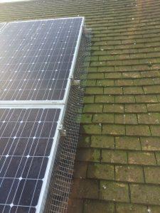 Solar panel pigeon protection Kent - pic1