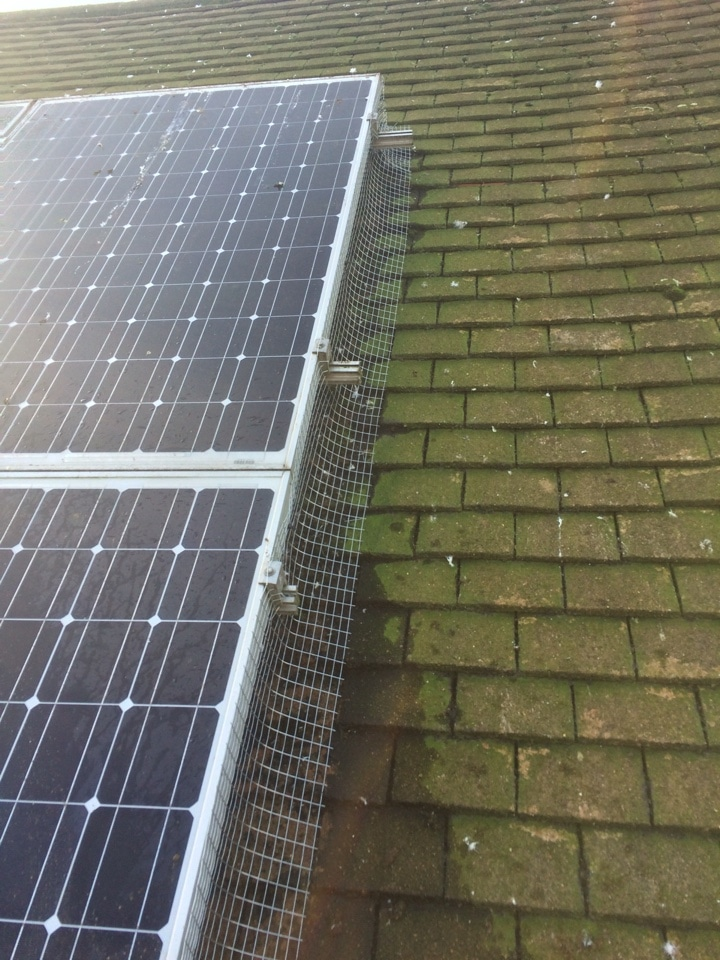 Solar Panel Pigeon Protection Kent We Stop Pigeons Nesting