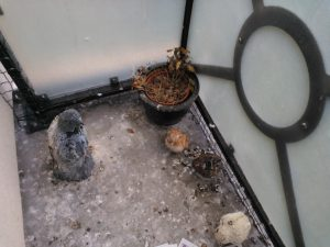 pigeon guano cleaning from balcony